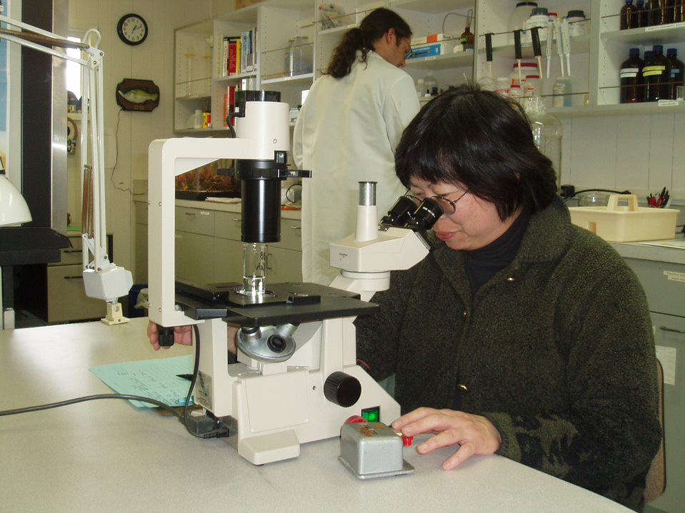 Ikoma conducting marine mussel bioassay